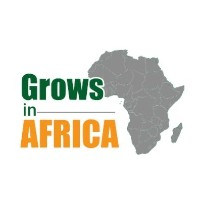 Grows in Africa